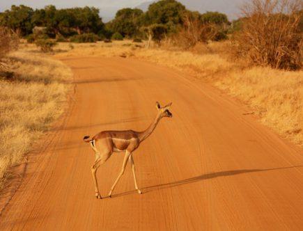 rowerem przez afrykę śladami kazimierza nowaka